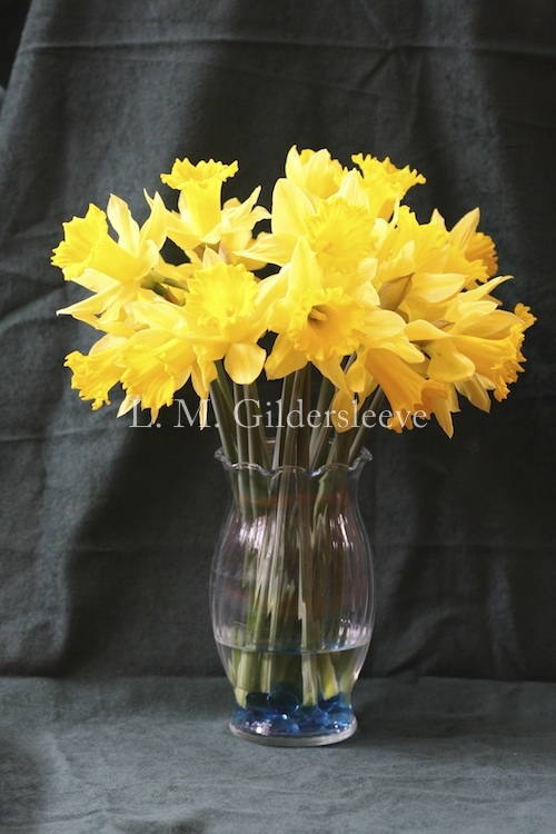 photograph of a daffodils in a clear vase