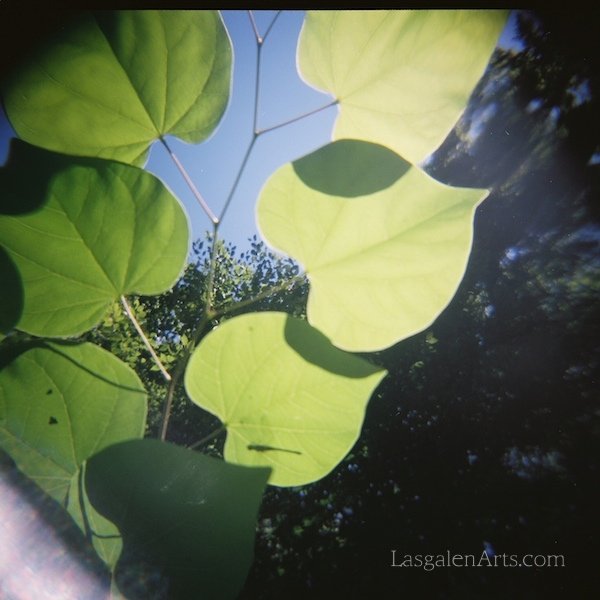 Holga photography of the underside of green leaves in the sun.