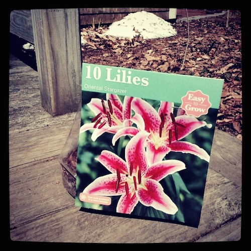 Stargazer lilies in a package.